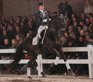 Theo en Hofrat hengstenshow 2013