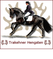 Trakehner Hengsten